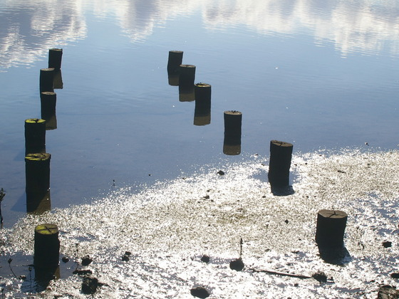 port cities - nyc's video poster