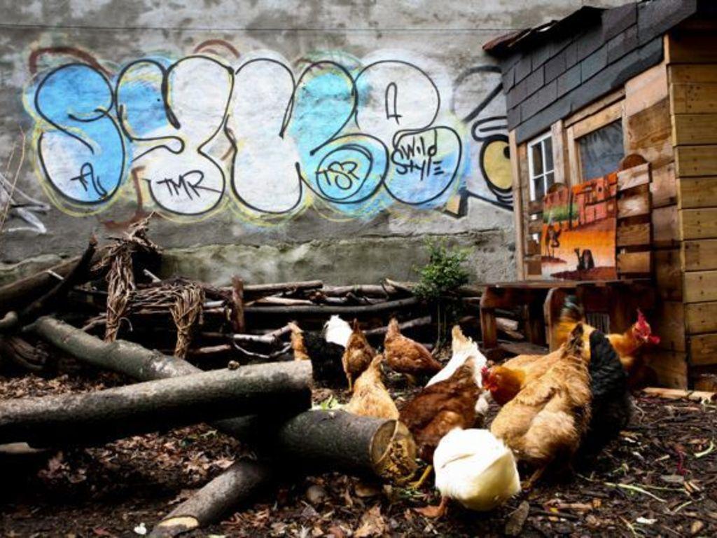 Urban Free Farm: Producing Free Food in Brooklyn!'s video poster