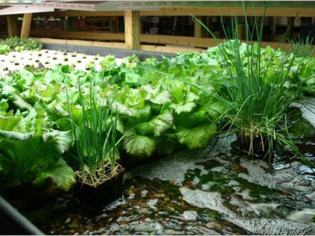"""""""Urban Harvest KC"""" Indoor Aquaponics Garden Project's video poster"""