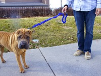 Leash Tamer – simply the best leash you'll ever own