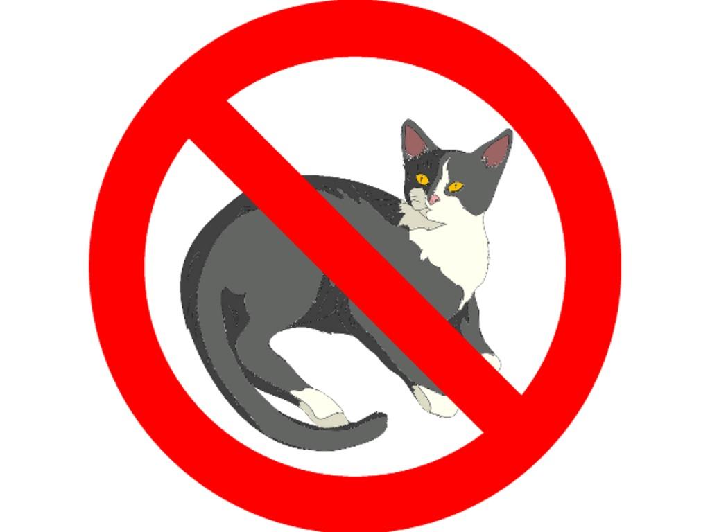 CatZapper - Get cat litter off your social media's video poster