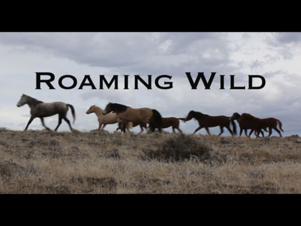 Roaming Wild's video poster