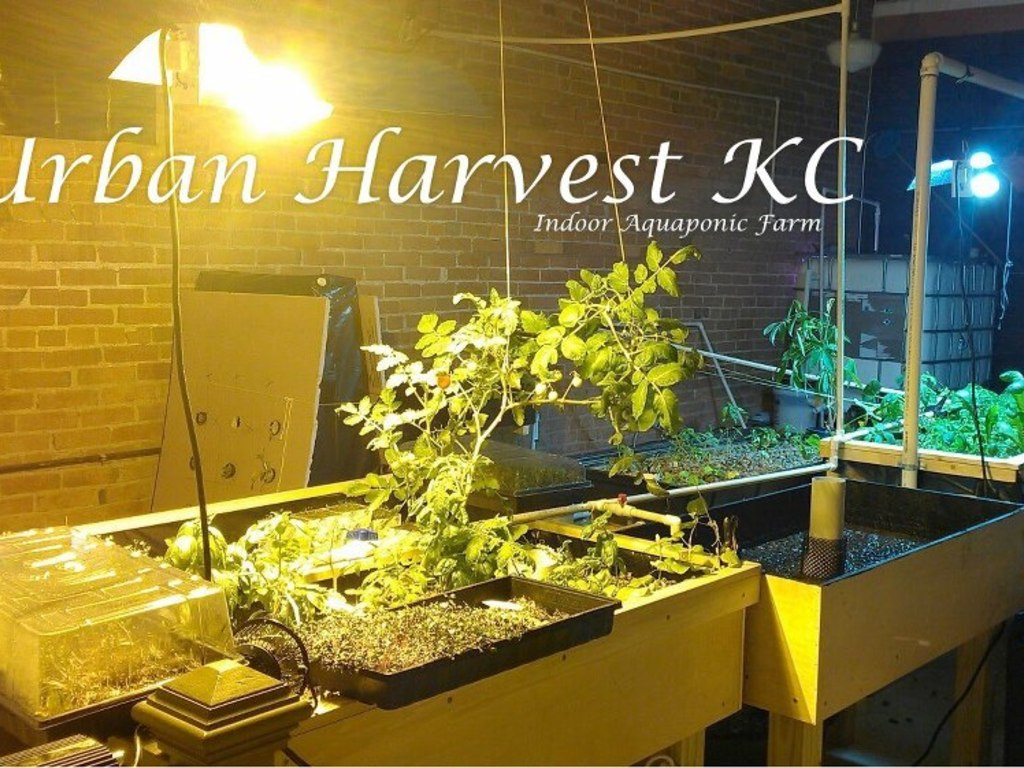 Urban Harvest KC - Indoor Aquaponic Sustainability Project's video poster