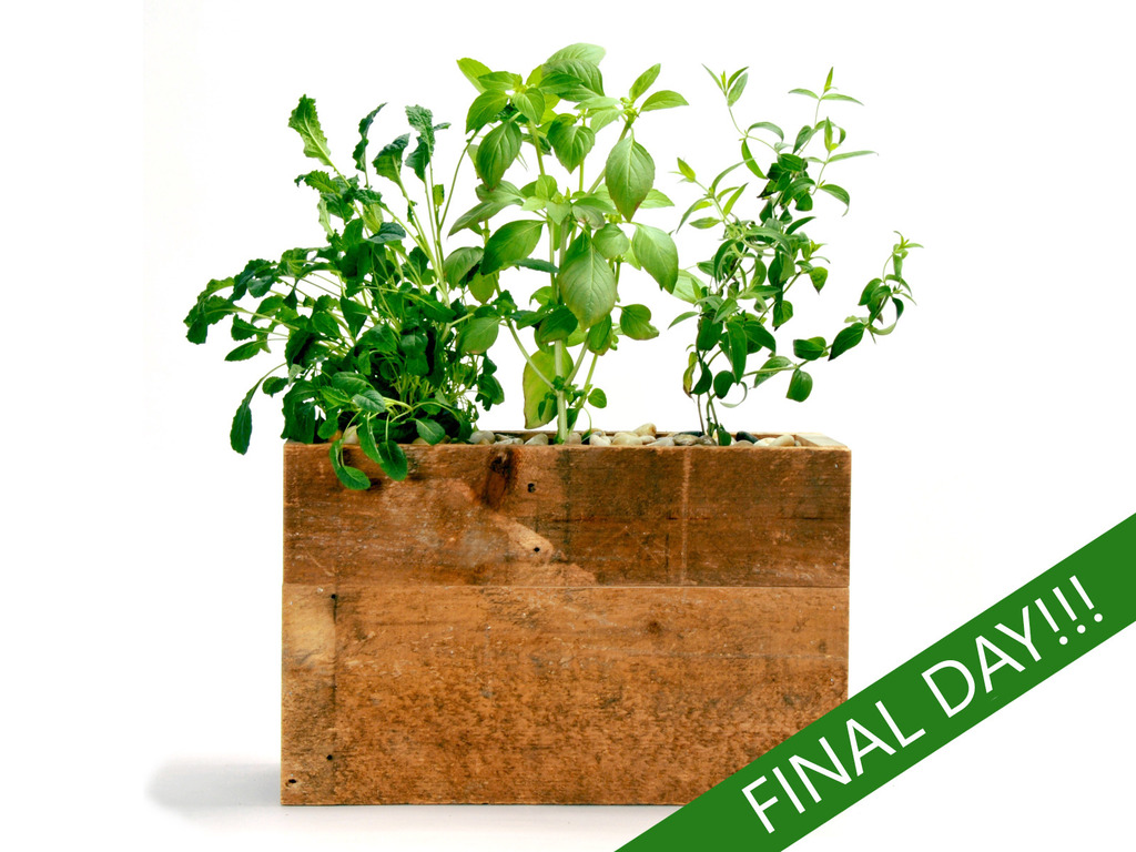 Attractive Hydroponic Planter for Herbs, Produce & Flowers's video poster