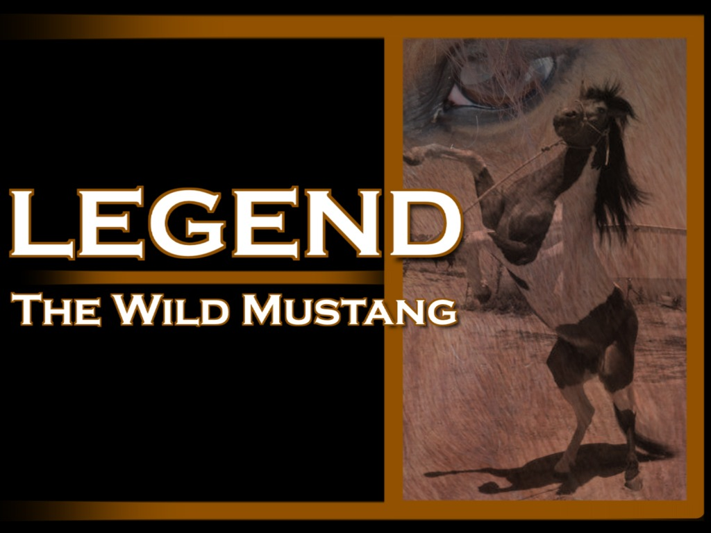 Legend, The Wild Mustang's video poster