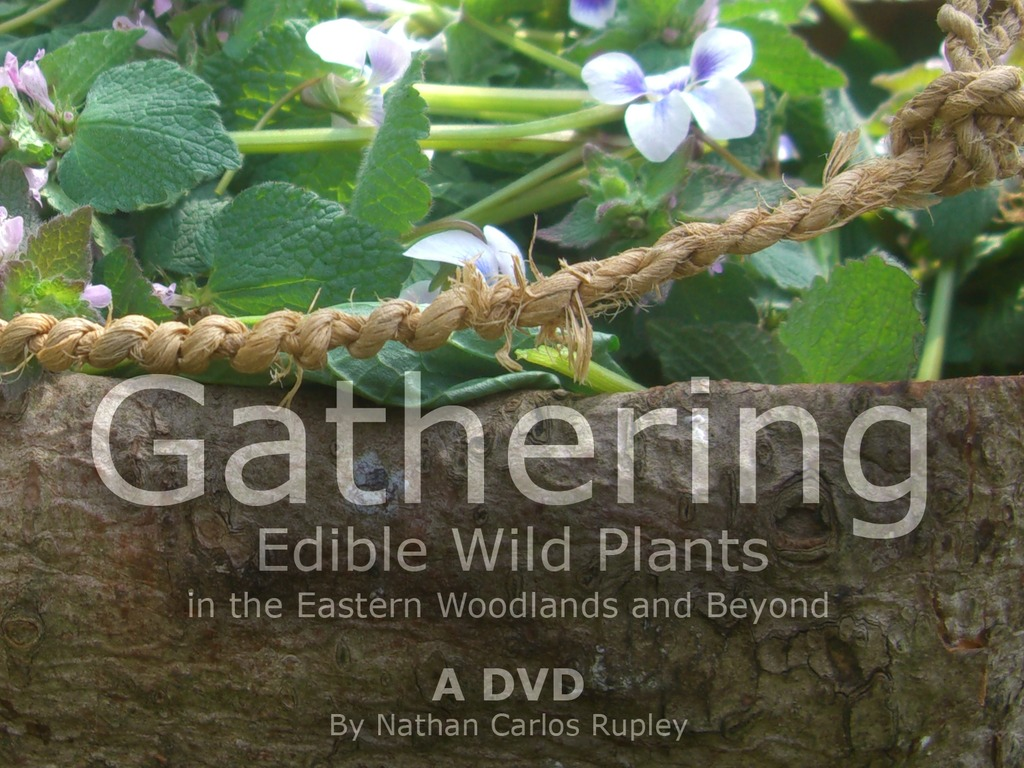 Gathering Edible Wild Plants DVD's video poster