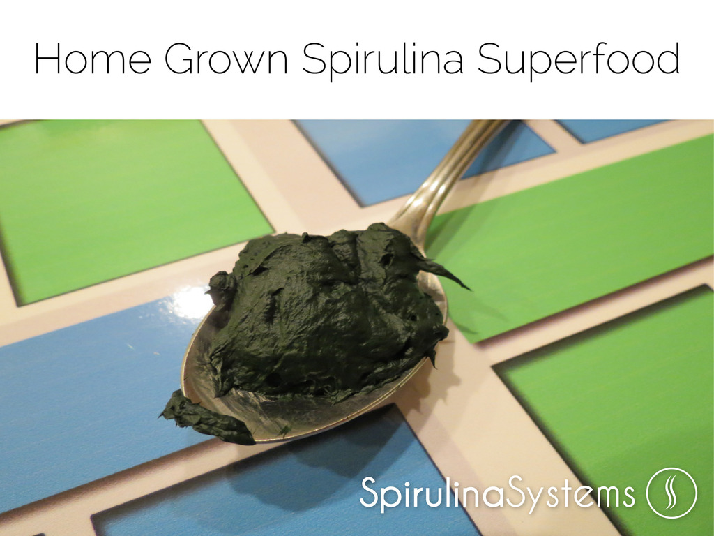 Food of the Future: Home Grown Spirulina Superfood Systems's video poster