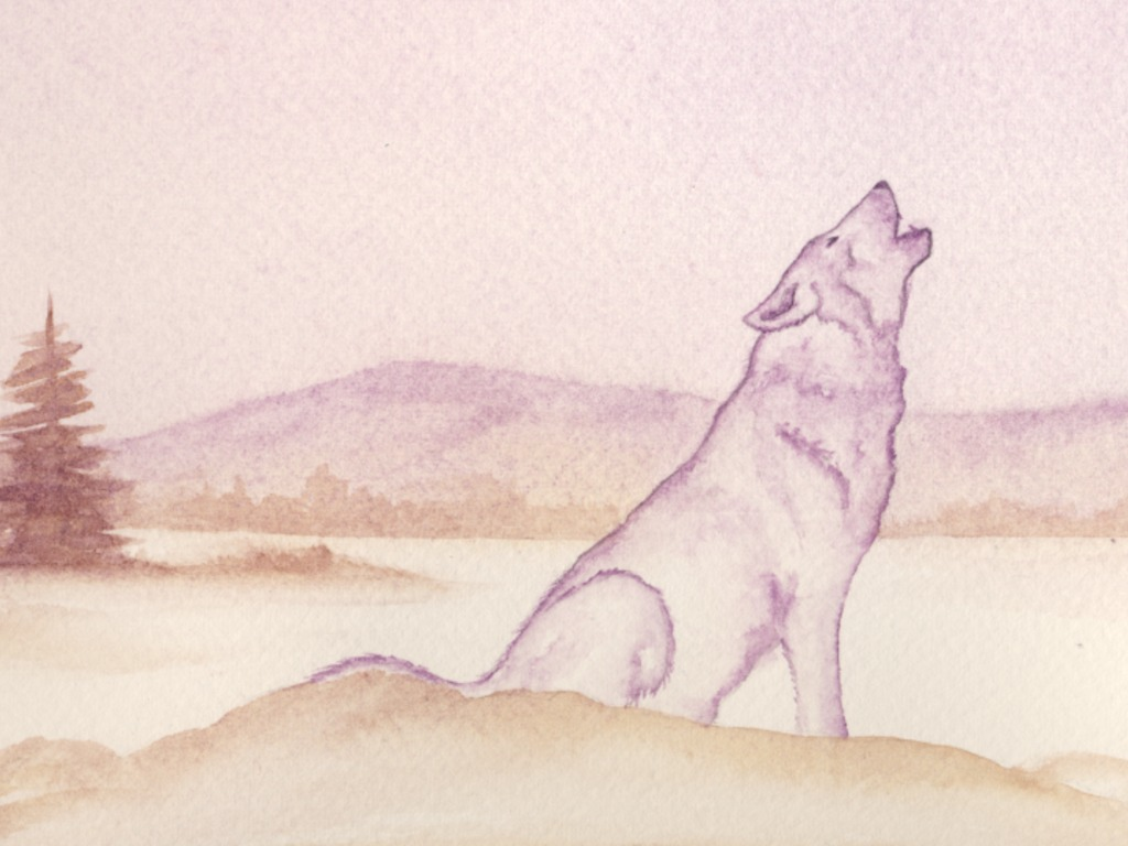 Take 'An Alphabet Journey' with the first wolf back in CA's video poster