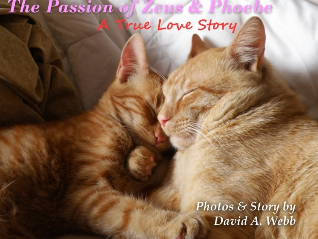 The Passion of Zeus & Phoebe: A True Love Story's video poster