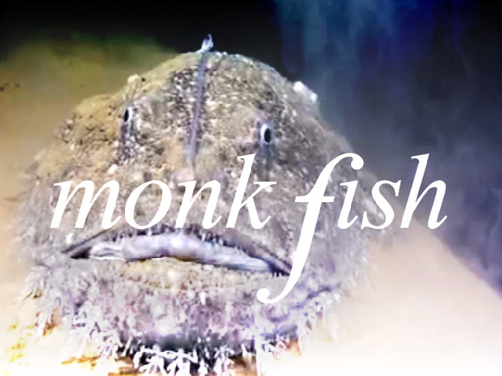 Monk Fish's video poster