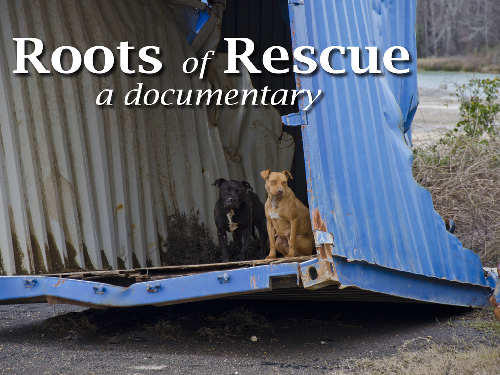 Roots of Rescue's video poster