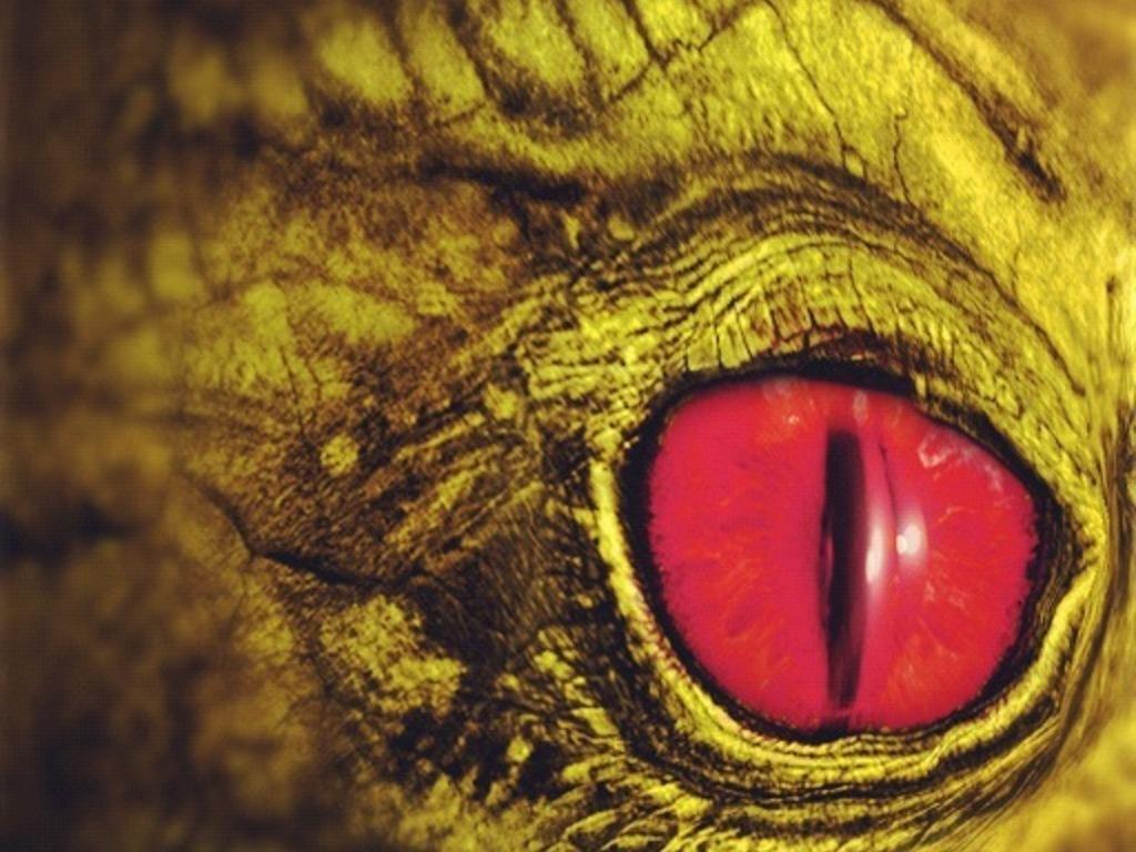 Dragon revenge's video poster