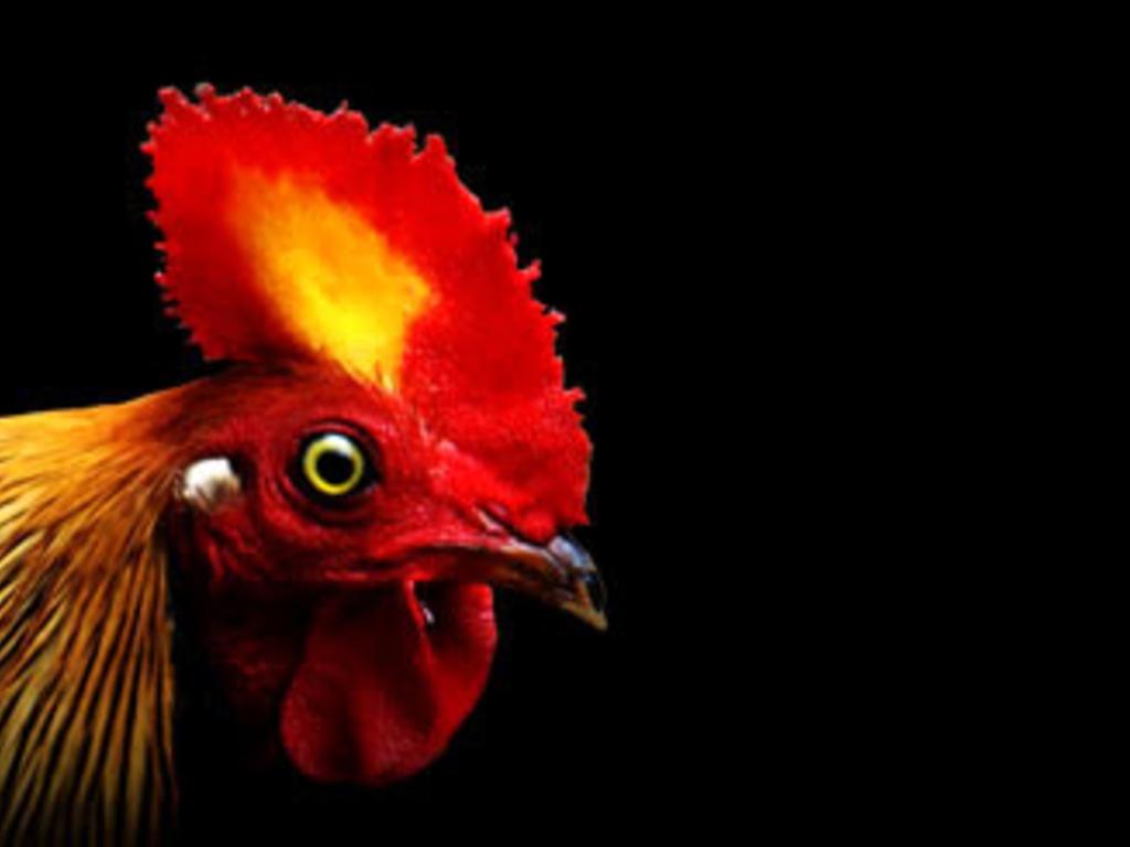 "Chicken The Movie ""Bridge Funding""'s video poster"